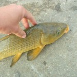 My first carp of the day at Granger