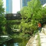 Shoal Creek Fly Fishing Austin | 3rd St.