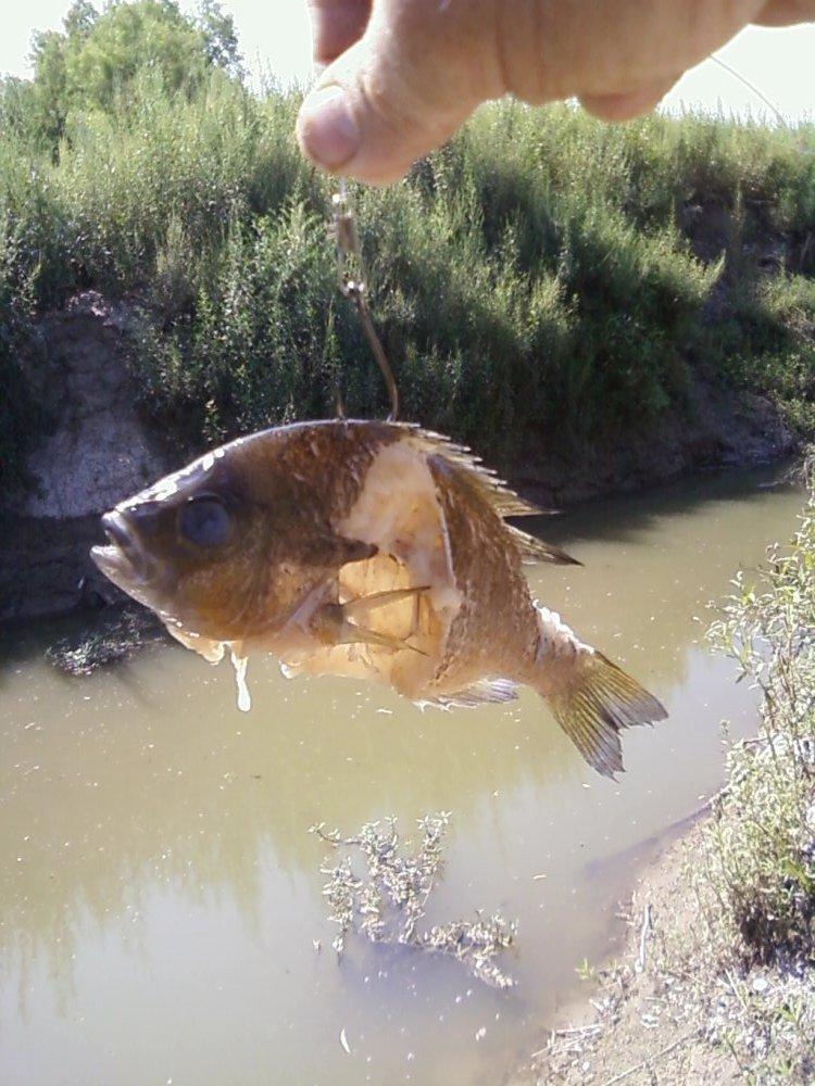 Fishing for gar in dallas 39 s trinity river matthew bey for Flying fish dallas