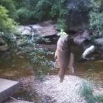 Warmouth at Blunn Creek