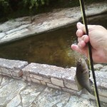 Waller Creek fishing
