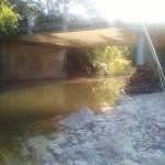 Bridge by secret cichlid hole