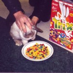 Force-Feeding Trix Cereal to Rabbits