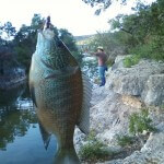 Fishing Bull Creek Austin