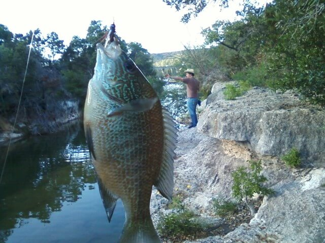 Fishing Bull Creek Austin