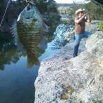 Bluegill at Bull Creek