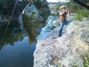 Bluegill at Bull Creek