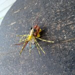 foam fly lure spider
