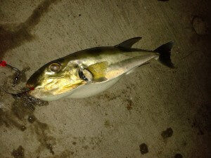 unidentified fish1